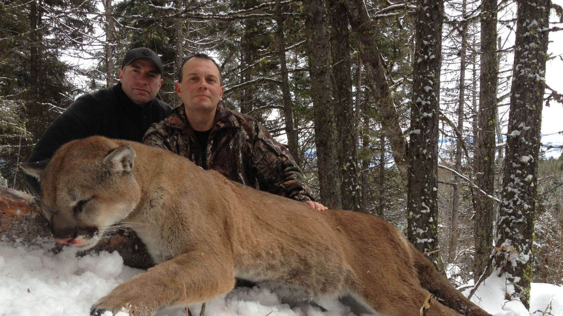 british columbia cougars personals The okanagan valley of british columbia is home to the provinces largest concentration of mule deer and shiras moose during the winter months.